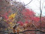 2011年11月13日妙義山 027.jpg