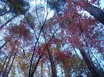 2011年11月23日滝子山 028.jpg