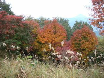2011年11月3日陣馬山~高尾山 015.jpg
