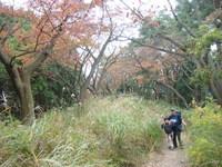 2011年11月3日陣馬山~高尾山 017.jpg