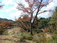 10年11月3日高尾山 016.jpg